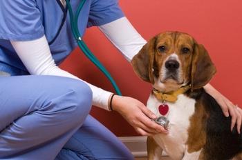 Вызываем ветеринара на дом показания